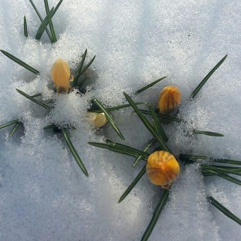 spring-139568_640